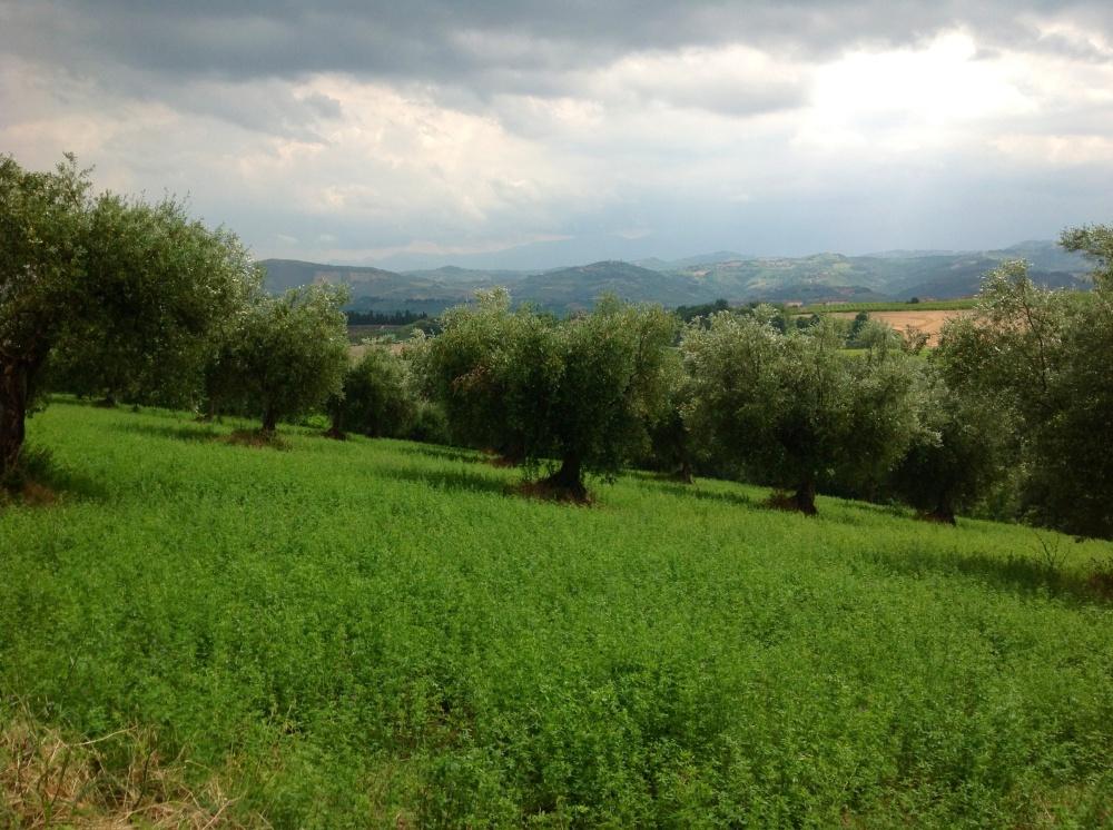 Cooking tours in Abruzzo Maple&Saffron
