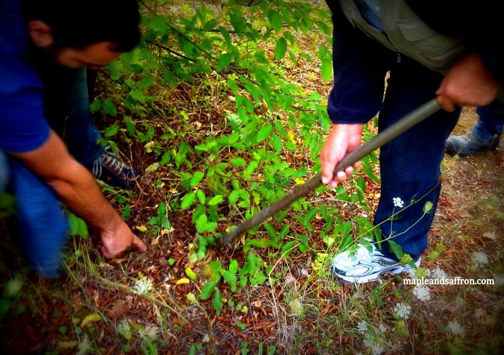 Maple&Saffron Abruzzo tours truffle hunt