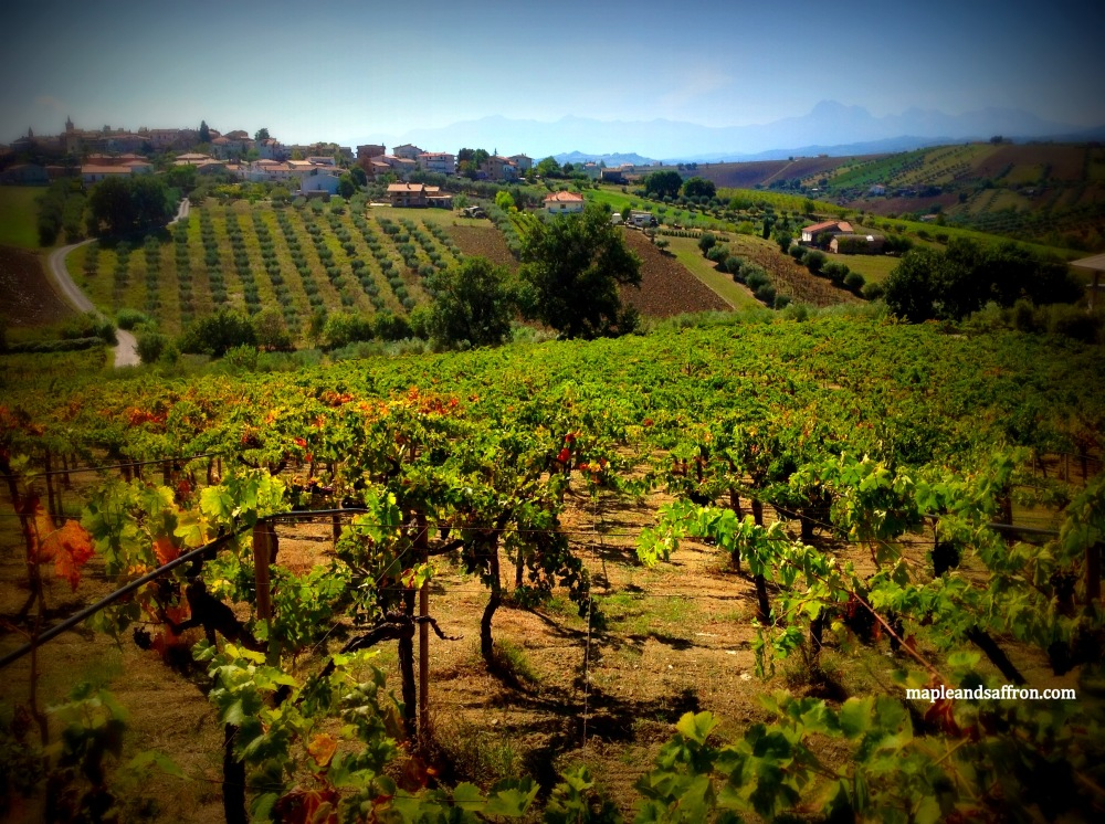 Maple&Saffron Abruzzo tours vineyards