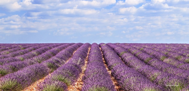 Provence - where the foodies go 1
