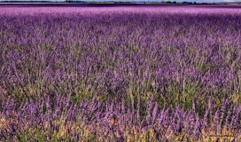 Provence - where the foodies go 4