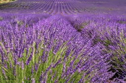 Provence - where the foodies go 5