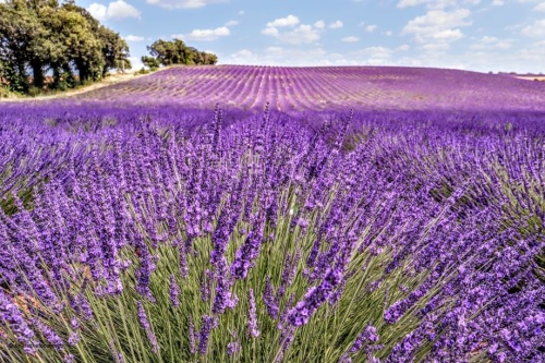 Provence - where the foodies go 6