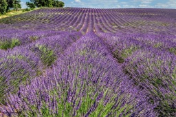 Provence - where the foodies go 7